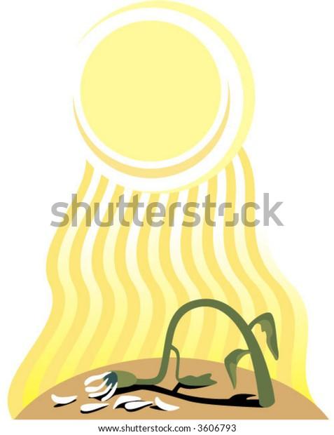 wilted flower in hot sun