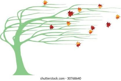 windswept tree in fall