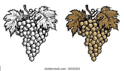 Wine Grape - Sepia, Black & White