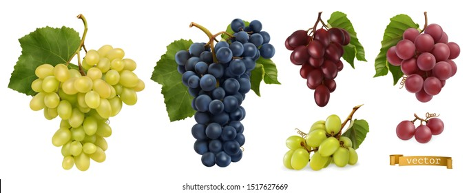 Wine grapes, table grapes. Fresh fruit. Miscellaneous 3d realistic vector objects. Food icon set