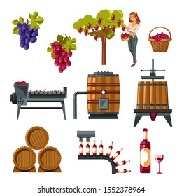 Winemaking process illustrated. Grapes growing, harvest collected, juice extract and fermentation process. Pressing, filtration, aging, storing in oak barrels, wine bottling. Vector illustration.