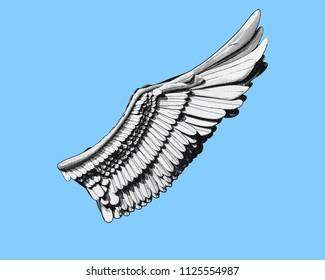Wing engraving drawing in black and white color illustration  isolated on light blue background