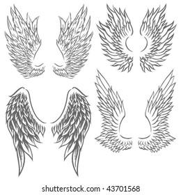 Wing Illustrations
