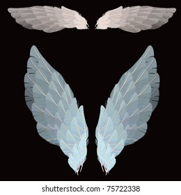 WINGS - VECTOR - ISOLATED