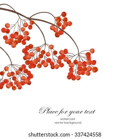 Winter  or autumn hand drawn card  with a branch of rowan  on the white background