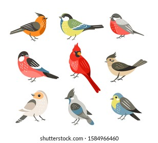 Winter birds flat vector illustrations set. Different wintertime songbirds isolated on white background. Red cardinal and bullfinch, blue tit and sparrow. Cute tufted titmouse, robin and jay.