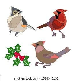 Winter birds and holly berries illustration cardinal titmouse Christmas vector set