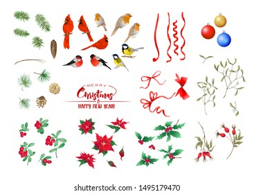 Winter birds, ribbons, Christmas decoration and wreath of spruce, pine, poinsettia, dog rose, cowberry, cranberry, fir. Set of elements for design. Colored vector illustration.