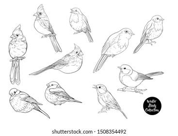 Winter birds: Tit bird, Robin bird, Cardinal bird, Bullfinch. Set of elements for design. Outline hand drawing vector illustration.