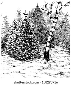 Winter forest. Black and white hand drawn landscape. Vector illustration.