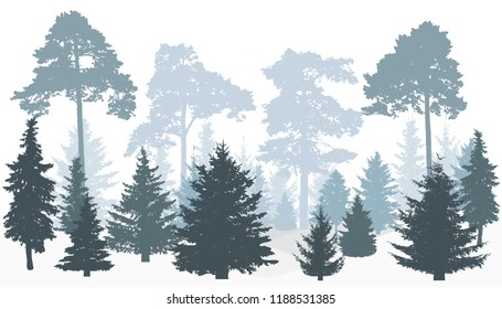 Winter forest silhouette. Pines, Fir trees.