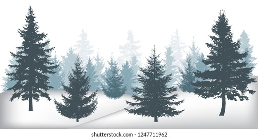 Winter forest, silhouettes of beautiful spruce trees.