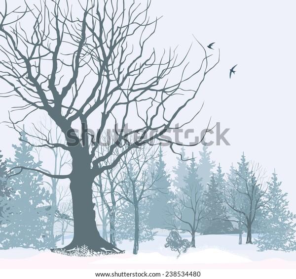 winter landscape park garden snow 600w 238534480