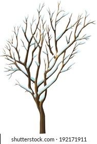 Winter Tree - Isolated on White background.