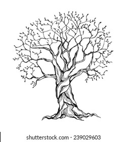 Winter tree in a stylized style. Black and white colors. Isolated on white background. Vector illustration.