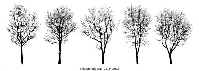 Winter trees silhouettes collection. Set of isolated vector design elements.   Hand drawn  illustration in sketch style.  Nature template. Clipart.
