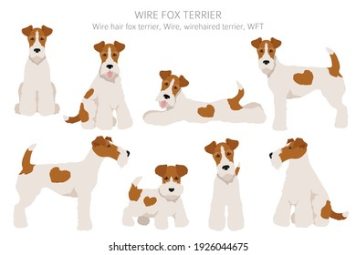 Wire fox terrier clipart. Different poses, coat colors set.  Vector illustration