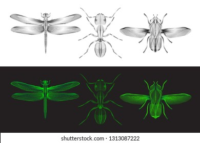 Wireframe 3d hologram style insects set.