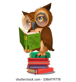Wise owl reading book isolated on white background. Vector cartoon close-up illustration.