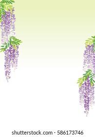 The wisteria flower vine background.