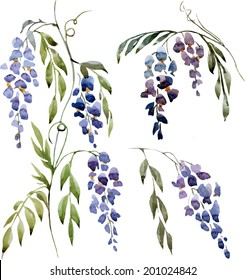 wisteria, painting, watercolor