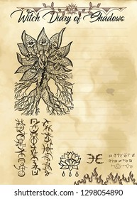Witch diary page 8 of 31 with mandrake plant and evil symbols. Magic wiccan old book with occult illustration, mystic vector background