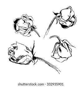 withered rose ink