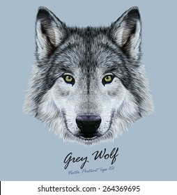 Wolf animal face. Scary grey wolf head. Realistic fur gray wild wolf portrait on blue background.