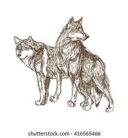 Wolf design. Animal concept.Wildlife animal, vector illustration