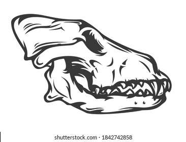 Wolf or dog skull in hand drawn monochrome style isolated on white background. Vintage cartoon vector illustration. Design element for tattoo, print, cover.