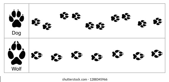 Wolf and dog tracks by comparison. Round and smaller tracks of dogs and oval bigger ones of wolves - isolated vector illustration on white background.
