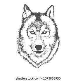 Wolf, hand drawn, sketch, vector illustration