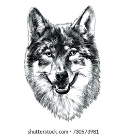 wolf head sketch vector graphics monochrome black-and-white drawing