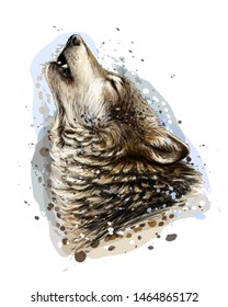 The wolf howls. Sketchy, graphical, color portrait of a wolf head on a white background with splashes of watercolor.