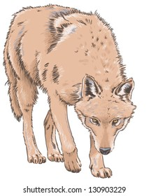 Wolf Isolated Vector Illustration