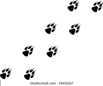 A Wolf paw Trail Illustration
