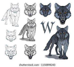 Wolf set, isolated on white background, colour illustration, suitable as logo or team mascot. Dangerous forest predator. Wolf's head. Wild animal. Gray wolf in full growth. Vector graphics to design