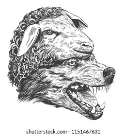 Wolf in sheep s clothing, Christian parable, hand drawn vector illustration realistic sketch