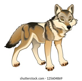 Wolf. Vector and cartoon isolated character
