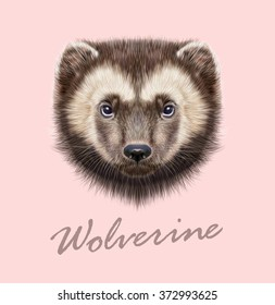 Wolverine Animal. Vector Illustrated Portrait of Wolverine on pink background.