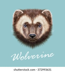 Wolverine Animal. Vector Illustrated Portrait of Wolverine on blue background.