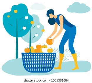 Woman in Blue Jumpsuit Folds Apples into Basket. Vector Illustration. People on Farm. Natural Products. New Technologies. Harvest. Farm Products. Grow Fruits. Farm Business. Family Business.