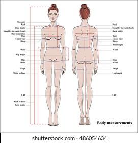 woman of upper torso diagram wiring diagram tutorial