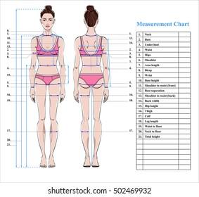 Vectores, imágenes y arte vectorial de stock sobre Women Body Shape
