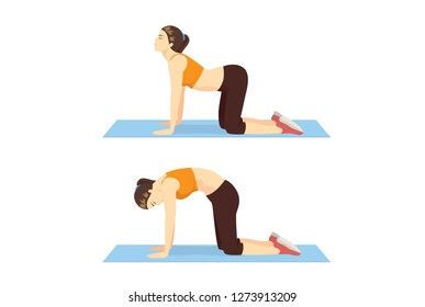 Woman doing Cat Cow Workout in 2 step to stretch the back and promote spinal flexibility. Illustration about exercise guide.