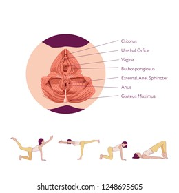 Woman doing exercises to strengthen the muscles of the vagina and pelvic floor muscles. Kegel exercises. Vector illustration isolated on white background. Anatomy scheme of pelvic floor muscles.