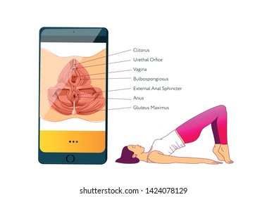 Woman doing exercises to strengthen the muscles of the vagina and pelvic floor muscles. Kegel exercises. Vector illustration of mobile app. Anatomy scheme of pelvic floor muscles on the screen.