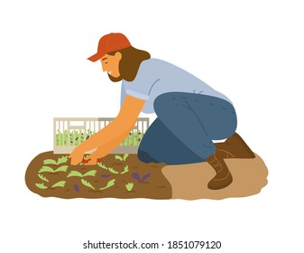 Woman Farmer Working Collecting Salad Leaves. Flat Vector Illustration.