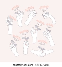 Woman hand set holding a flower. Feminine illustration. Vector illustration