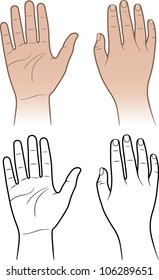 Woman, man hands isolated on white (vector illustration)